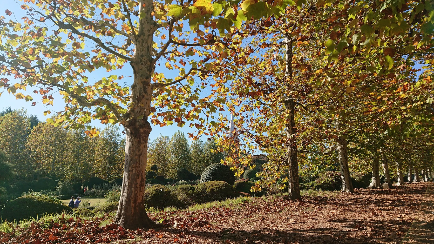 紅葉と落ち葉