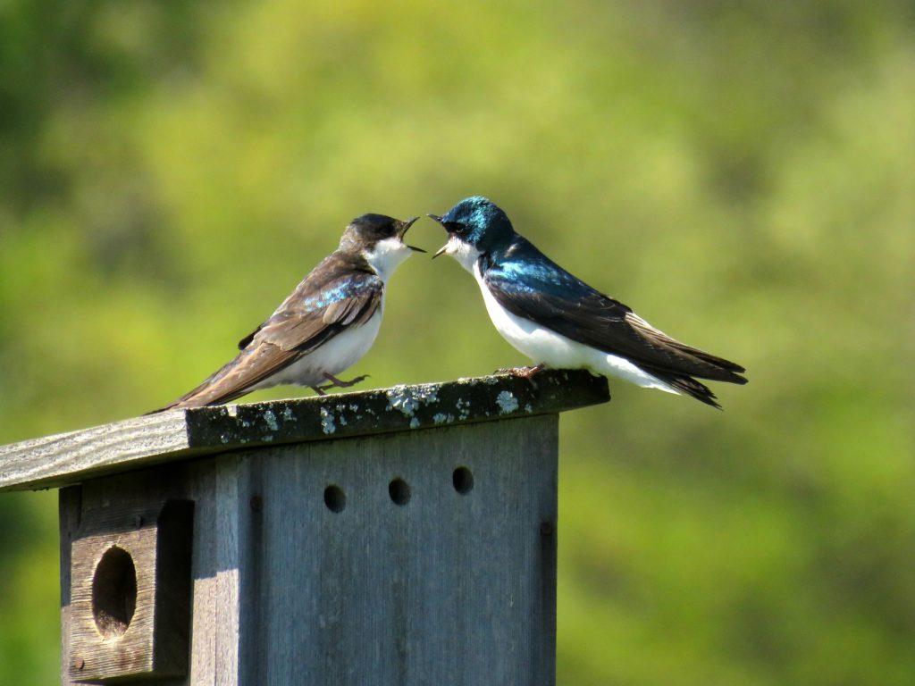口論をする2羽の鳥