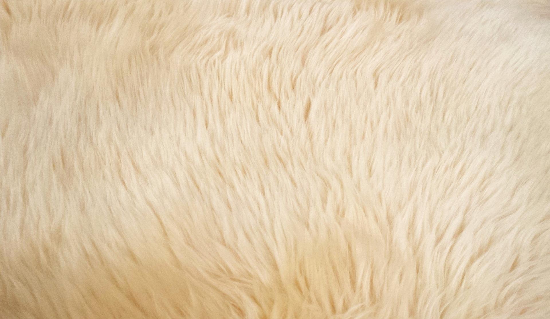 【アメリカ在住】カーペットの掃除方法&クリーナーなしでダニ対策!